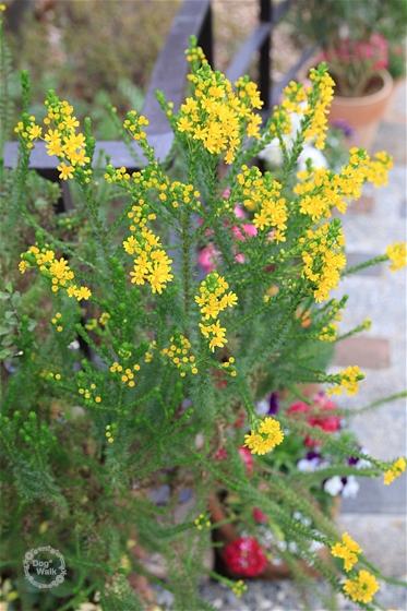 黄色の小花