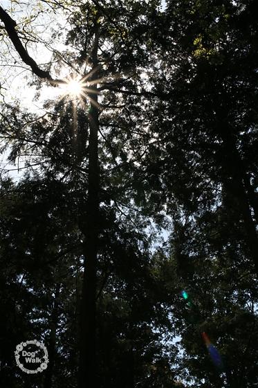 天神社の後ろの森