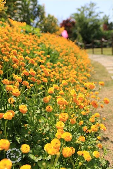 オレンジの小花