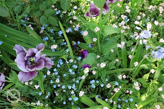 チューリップと小花