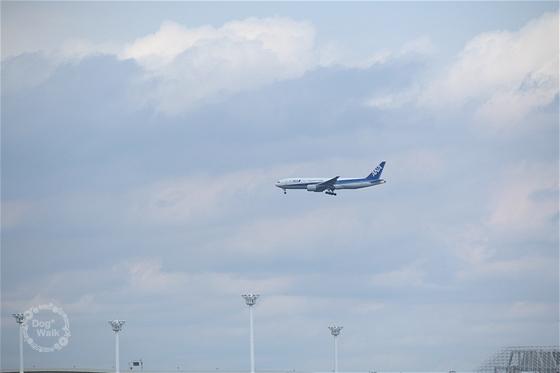 飛行機(ANA)
