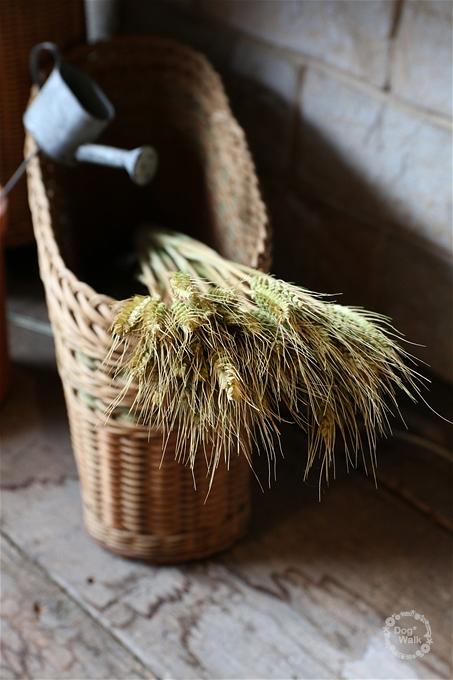 籠に入った麦の穂
