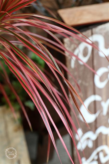赤い葉っぱの植物