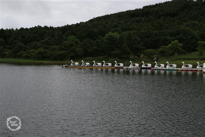 女神湖のスワンボート