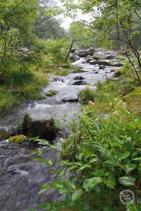 自然園内の小川