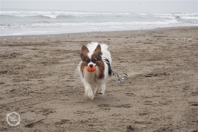 ノア@古所海水浴でボール遊び