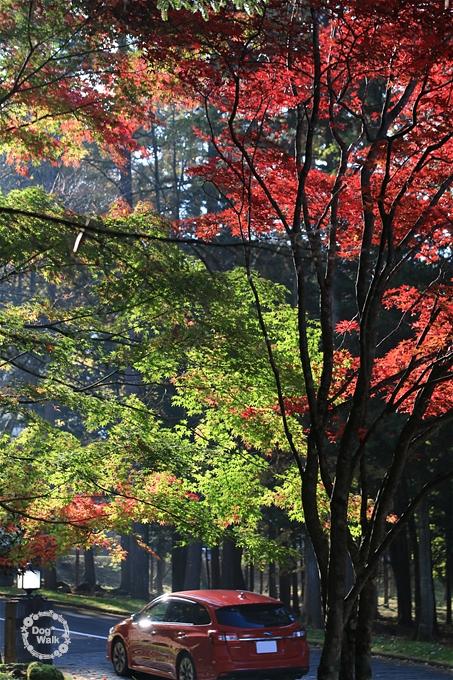 赤と緑の紅葉
