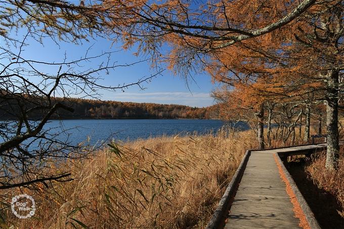 女神湖の遊歩道