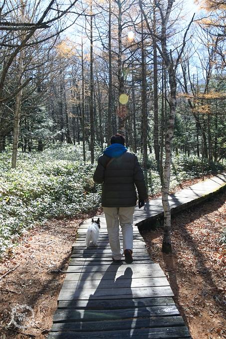 自然園の遊歩道