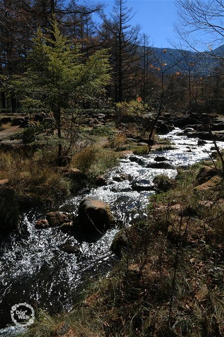 御泉水の小川