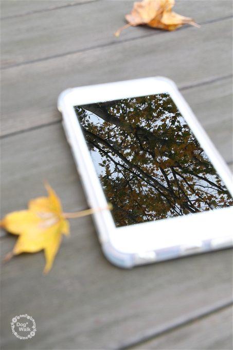 iPhoneと紅葉