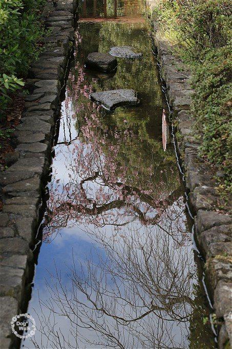 水面に映る枝垂桜