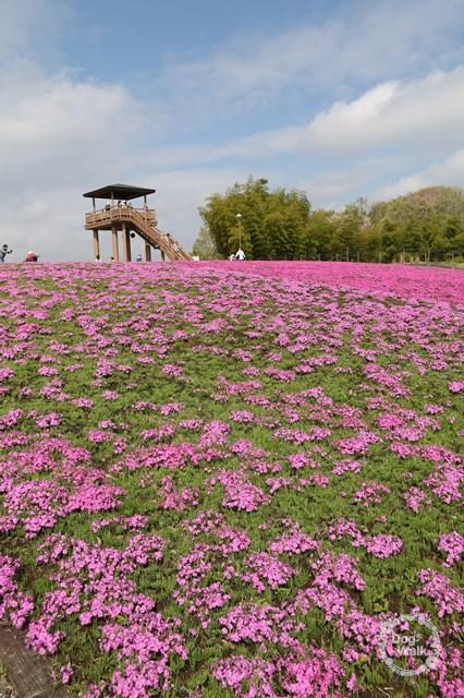 市貝町芝ざくら公園