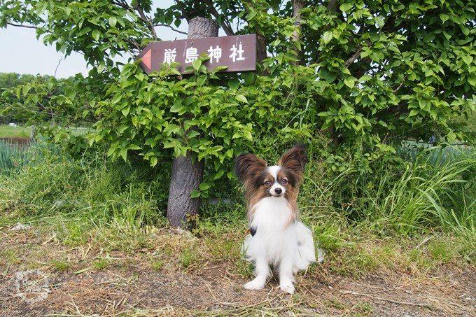 厳島神社への案内板