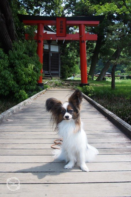 ノア@厳島神社