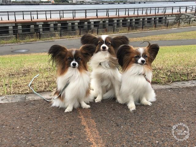 左からモナカちゃん、ノア、マリモちゃん