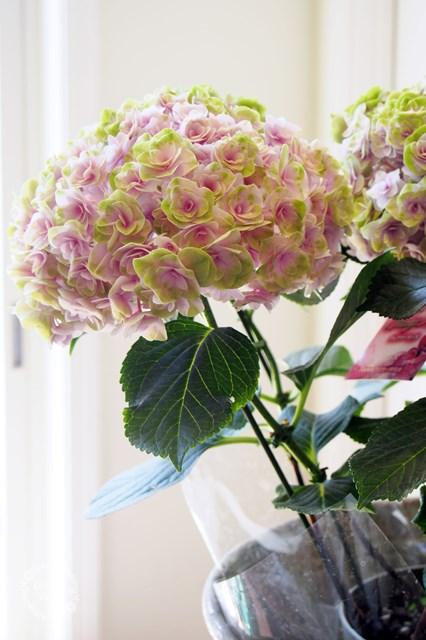 フェアリー紫陽花