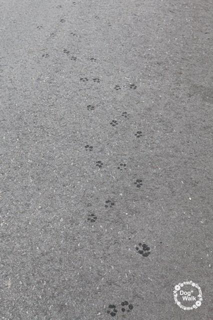 ノアの足跡