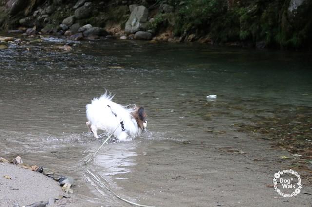 ノア@烏川渓谷で水遊び