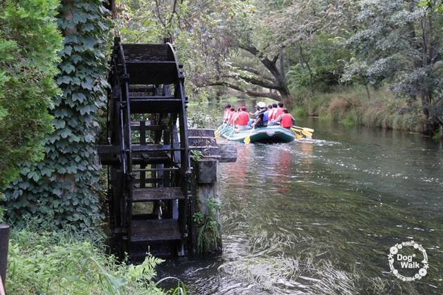 大王わさび農場の水車と蓼川