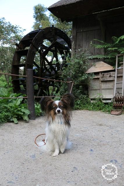 ノア@大王わさび農場の水車小屋の前で