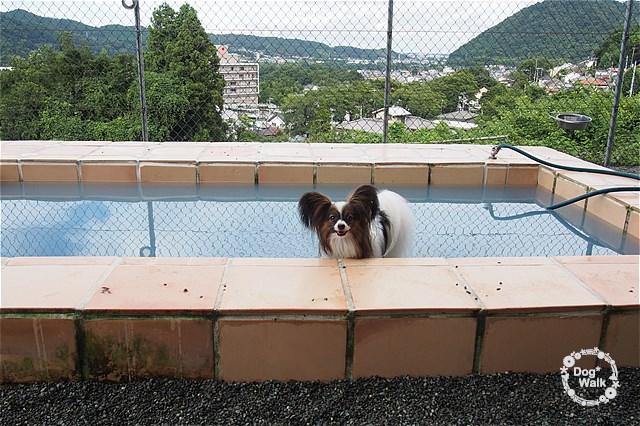 プールに入るノア