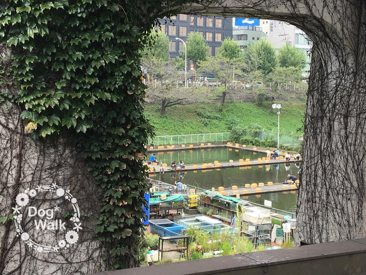 駅のホームから見える釣り堀