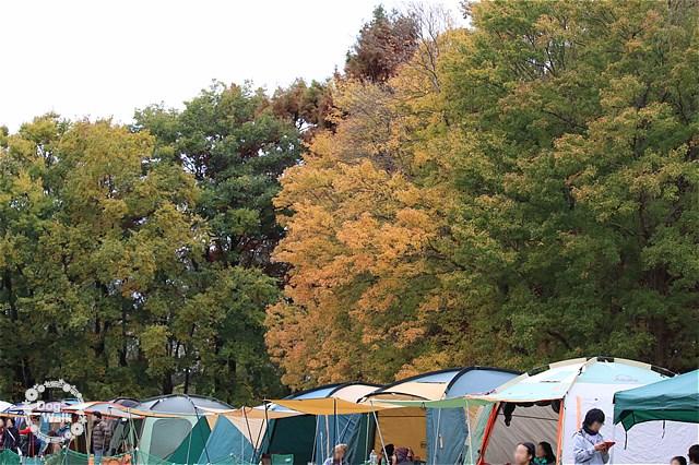 黄葉の秋ヶ瀬公園