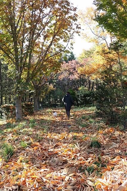信州スカイパークを歩くハマクロとノア