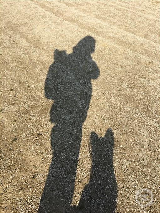 ホッピーとノアとお散歩