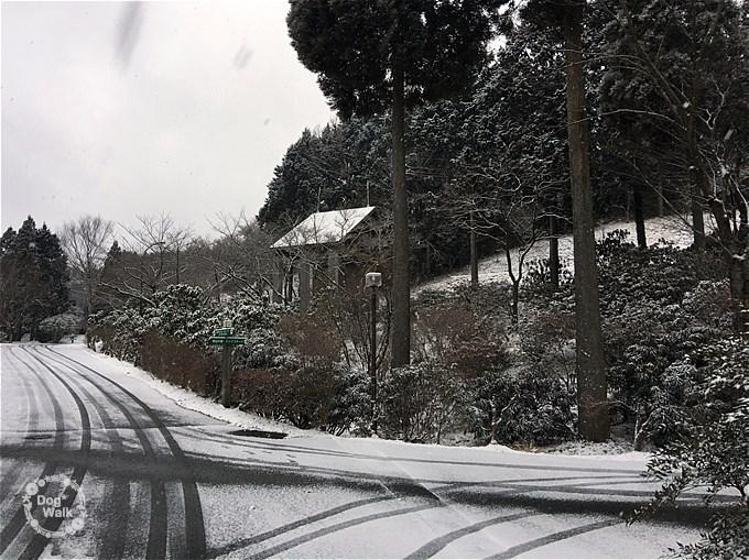 雪のグリーンピア八女