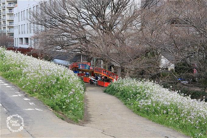 二十一世紀桜並木の屋台