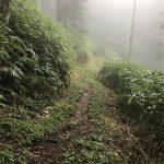 乗鞍高原登山道