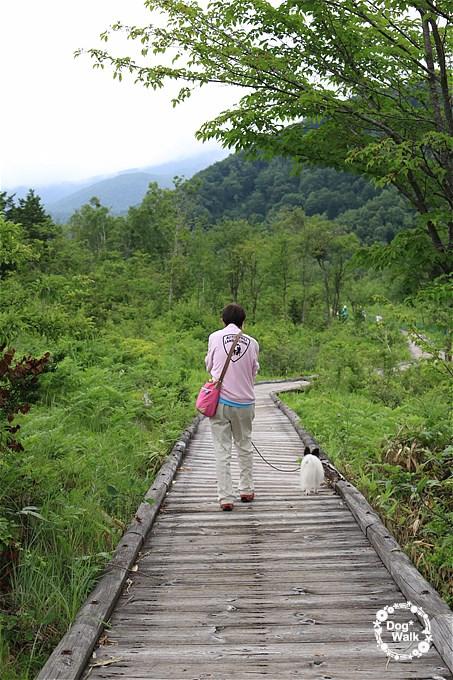一の瀬園地周遊コースの木道