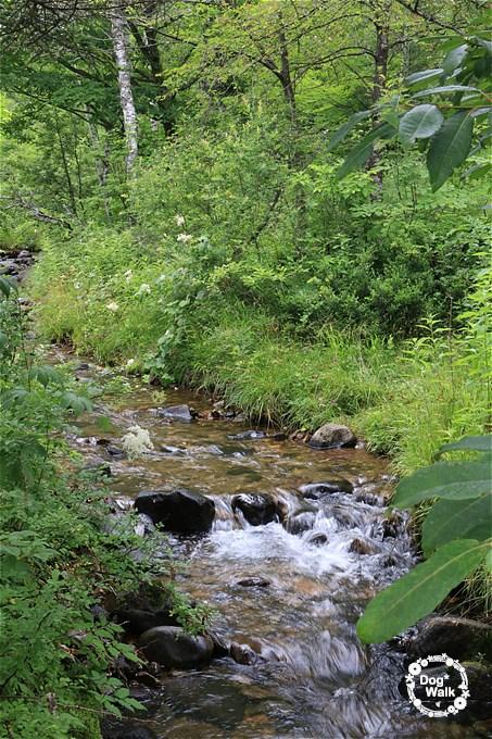 一の瀬園地周遊コースの小川