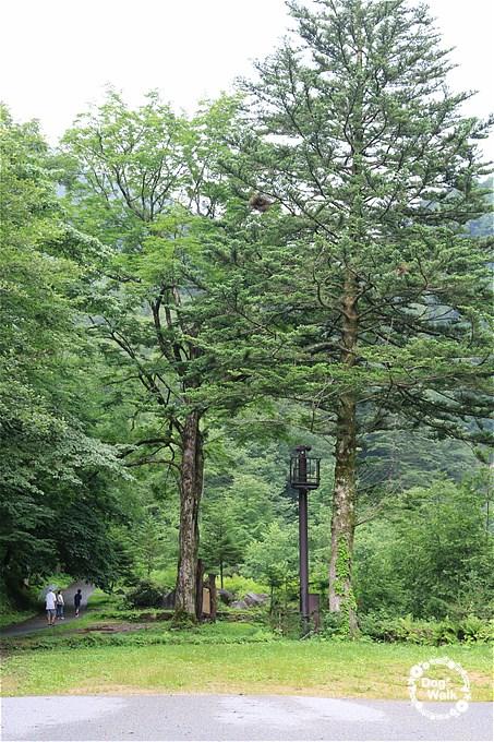 平湯大滝へ行く道