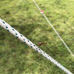 タープのロープに止まったアカトンボ