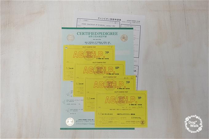 アジリティチャンピオン登録申請