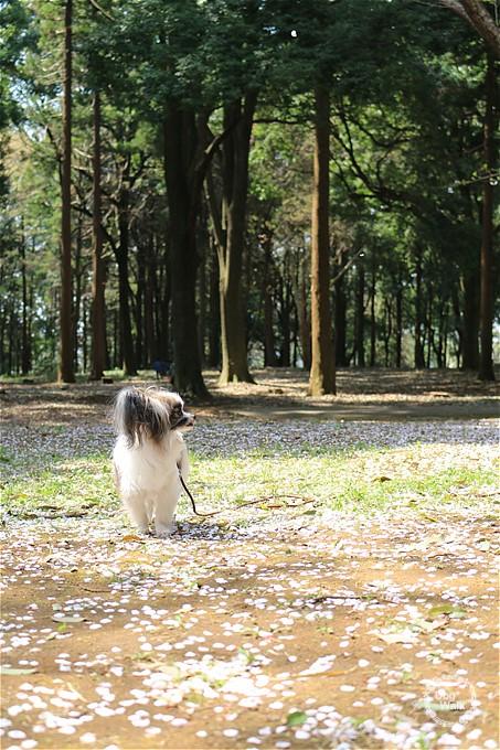 五本松公園をホッピーと