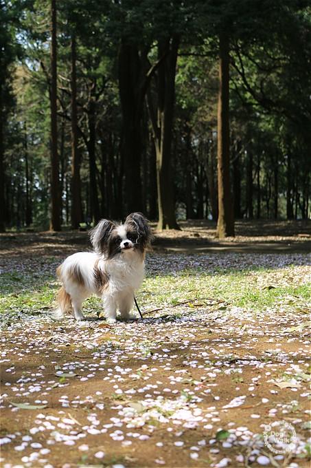 ホッピーと五本松公園をお散歩
