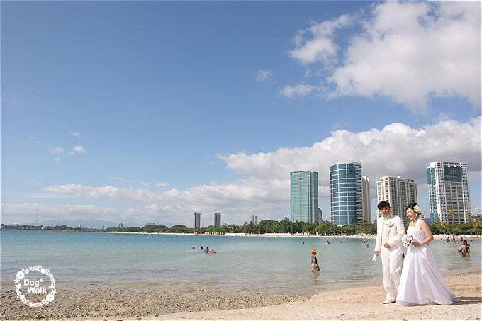 ハマクロとハワイのビーチで